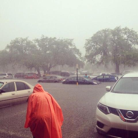 Some cars ended up partially underwater in a parking lot at USF Friday after the heavy rains.