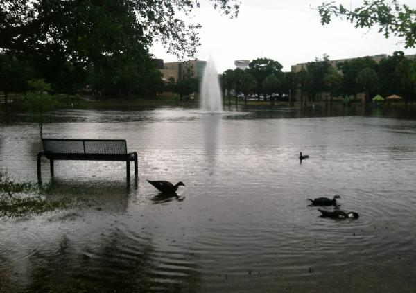 Nice weather for ducks at USF