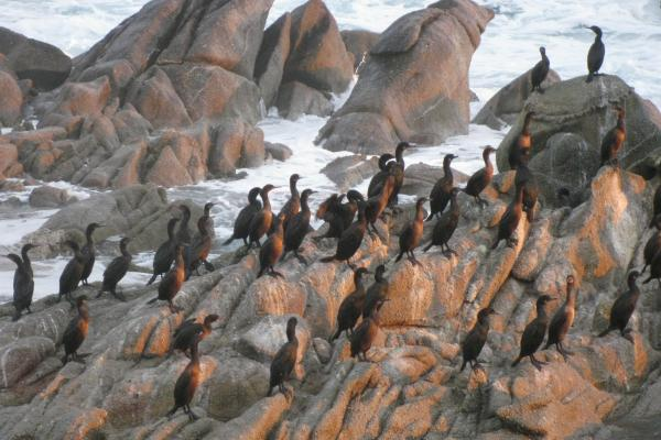 <p>Cormorants retreat to the shore near the bay just before a storm in November 2012.</p><!--[endif]-->