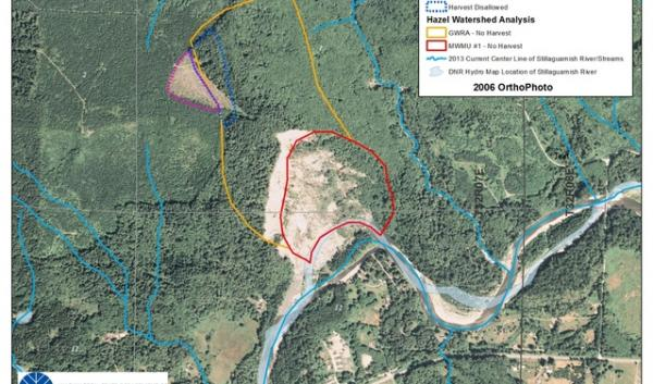 Washington Department of Natural Resources image shows 2004 clear-cut (near dotted purple line) extending into no-logging zone (marked with yellow line) at site of the March 22, 2014, Oso landslide.