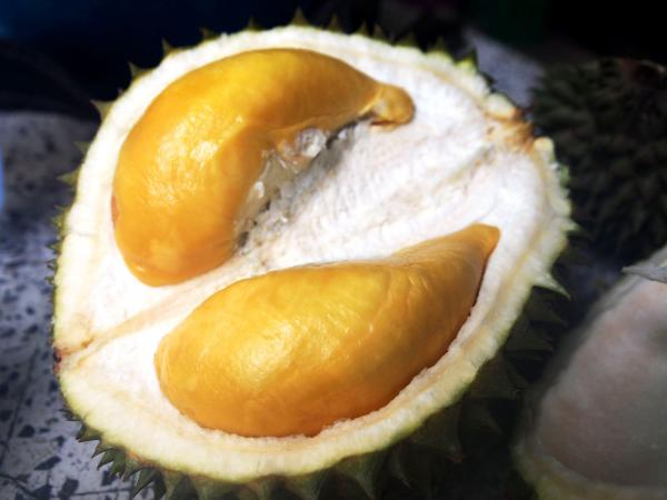 "According to Gasik, the Puangmanee durian's flesh has ""a smooth, chocolatey sensation."""