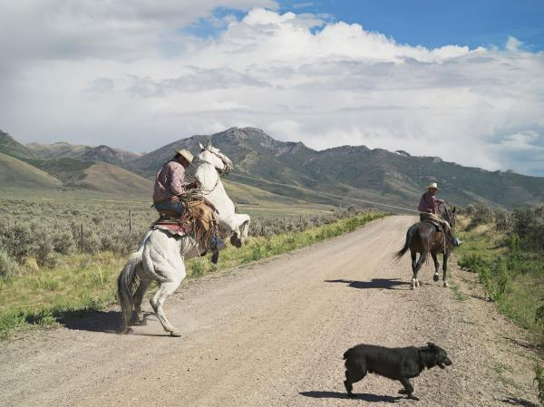 <em>Casey and Rowdy Horse Training, 71 Ranch, Deeth, Nevada 2012</em>