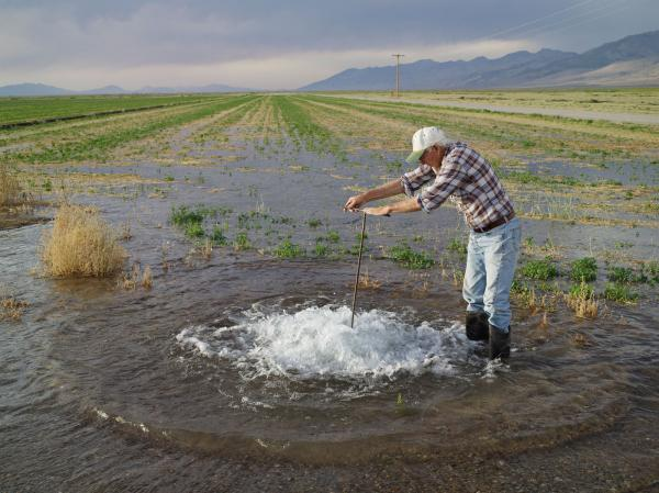 <em> Don Flood Irrigating Alfalfa, Diamond Valley, Nevada 2012</em>