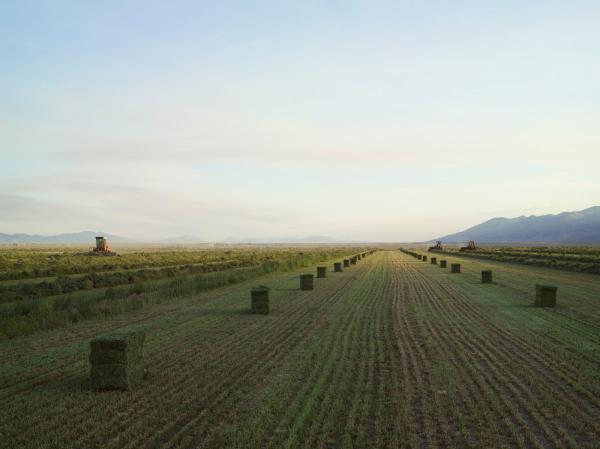 <em>Baling Hay, Diamond Valley, Nevada 2012</em>