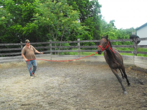 Riding teacher Will Burke works with Hoke at the ex-racehorse's new home at Double H Stable, at the foot of the Blue Ridge Mountains in Virginia.