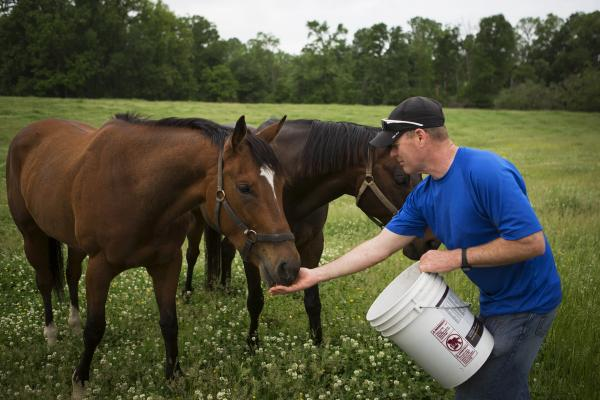 Tom Strauss rounds up some ex-racehorses to show potential adopters. His wife, Beverly, co-founded the MidAtlantic Horse Rescue Organization at Woodstock Farm in Maryland. The rescue takes care of up to 14 horses at a time.