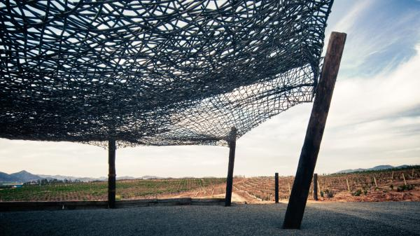 A canopy above the Vena Cava winery was created out of wood reclaimed by the architects.