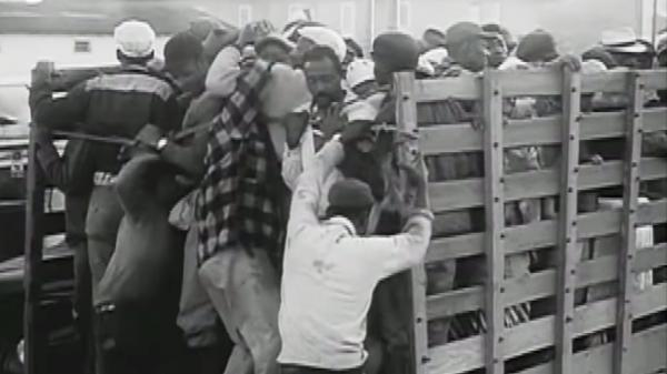 Workers crowd into the backs of trucks in the opening scene of 1960's <em>Harvest of Shame.</em>