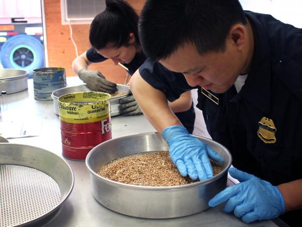 David Ng (right) and Amanda Furrow, Customs and Border Protection agricultural specialists, inspect wheat for insects and alien seeds at a port in Baltimore, Md.