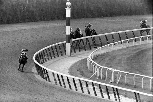 Jockey Ron Turcotte, aboard Secretariat, turns for a look at the rest of the field — many lengths behind — in 1973 as they make the final turn to win the Belmont Stakes.