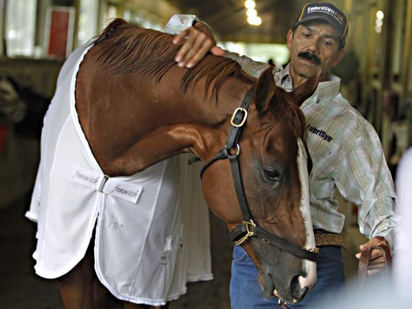 Groom Raul Rodriguez rubs Belmont Stakes hopeful California Chrome at Belmont Park on Thursday.