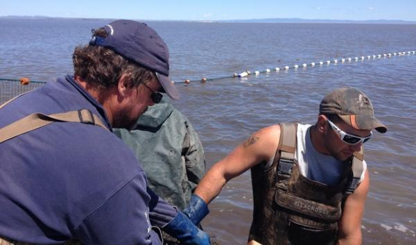 Tim Adams and his fellow fishermen came from Minnesota to the Malheur National Wildlife Refuge to help U.S. Fish and Wildlife Service see if commercial fishing could help eradicate invasive carp.