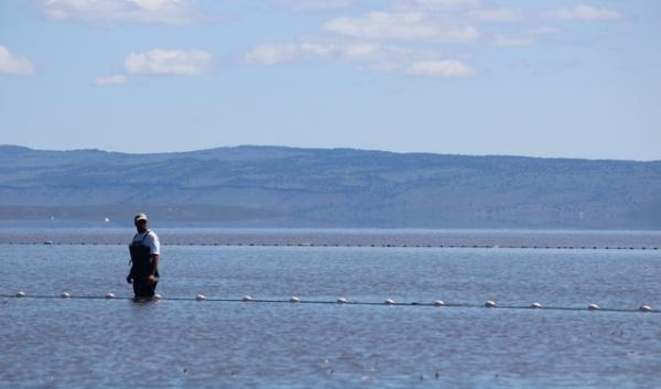 Malheur Lake is filled with open water that scientists say should be filled with reeds and other plants that provide habitat for migrating waterfowl.