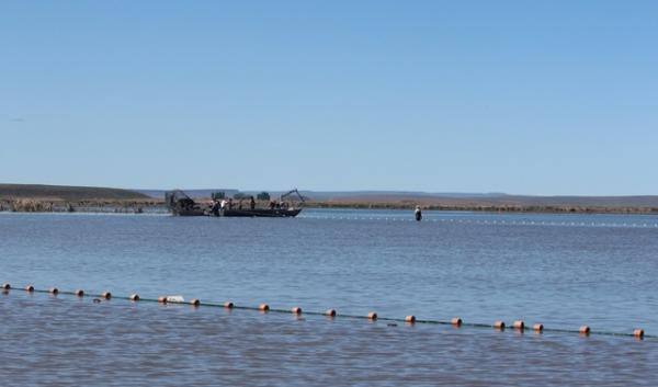 The invasive carp on Malheur National Wildlife Refuge have been a problem for decades and refuge staff are seeking solutions that could include commercial fishing.