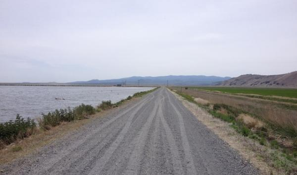 Irrigated crops can be often be seen on one side of the road in the Klamath Basin's wildlife refuges with open water or wetlands on the other side.