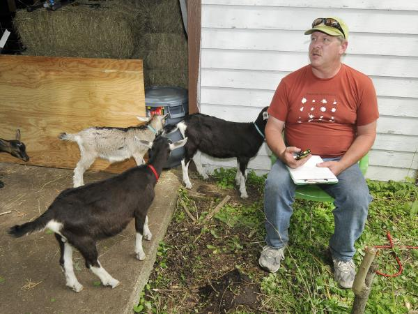 Leonard Pollara, of Idyll Farms, with some of the goats housed in the Brightmoor neighborhood of Detroit.