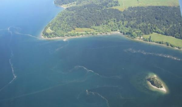 Algae blooms in Puget Sound, photographed from a research plane. These blooms of algae eventually sink to the bottom and decompose, releasing CO2 which makes the water more acidic.