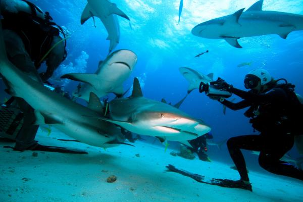 Madison Stewart (right) filming Caribbean reef sharks. (Ernst Stewart)