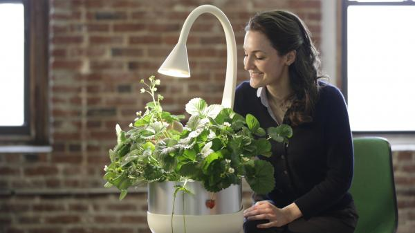 SproutsIO Inc. allows people to easily grow fresh produce inside a home or office. The system is a spinoff of research done at the MIT Media Lab.