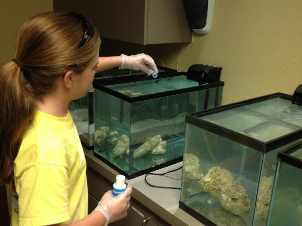 Lauren Arrington's science project lowered the salinity in tanks and showed that lionfish can live in nearly fresh water.