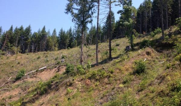 The Buck Rising site in Southern Oregon demonstrates a controversial logging practice known as variable retention harvests.