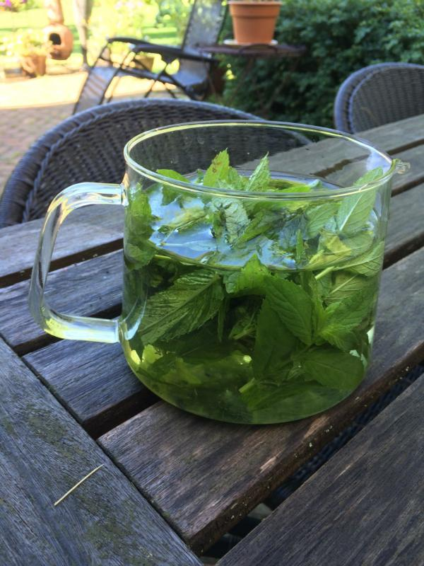 Gunst's refreshing sun tea recipe includes just mint leaves, summer sun, and time. (Kathy Gunst/Here & Now)