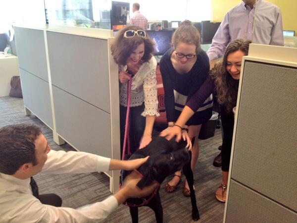 Members of the Here & Now staff fawn over Clementine, one of many dogs here in our offices at Take Your Dog To Work Day. (Here & Now)