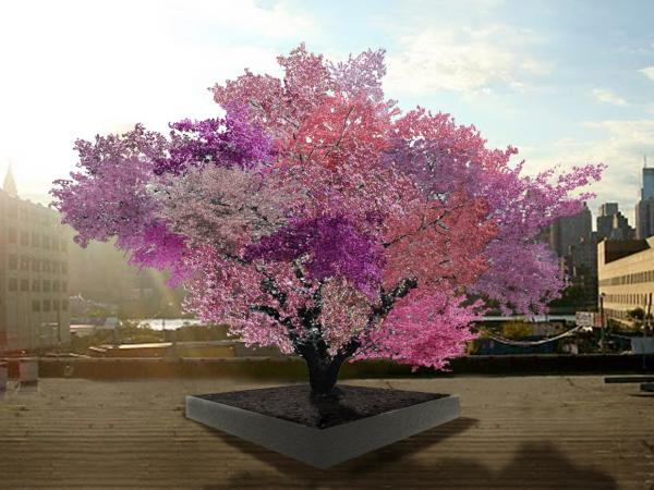 "Sam Van Aken's grafted fruit trees are still quite young, but this artist rendering shows what he expects the ""Tree of 40 Fruit"" to look like in springtime in a few years."