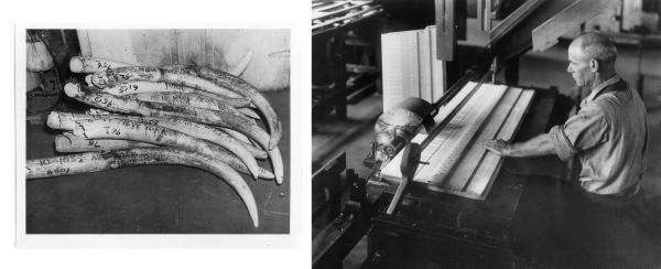 (Left) Ivory tusks at Pratt, Read, imported from Portuguese East Africa, now Mozambique, 1950. (Right) A Pratt, Read worker uses a five-bladed circular saw to cut ivory for a piano keyboard in the 1920s.
