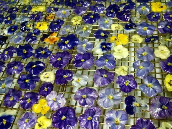 Violas grown on John Clemons' farm are crystallized and glazed. Clemons patented the process to keep the flowers from spoiling.