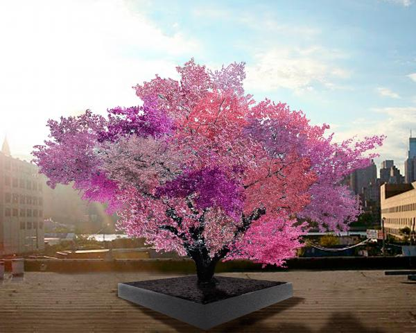 An artist rendering of the Tree of 40 Fruit mature and in bloom.