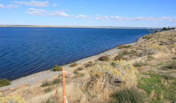 Members of the Yakima and Umatilla tribes say they fish here, where the Morrow Pacific coal export project has proposed to build a dock in Boardman.