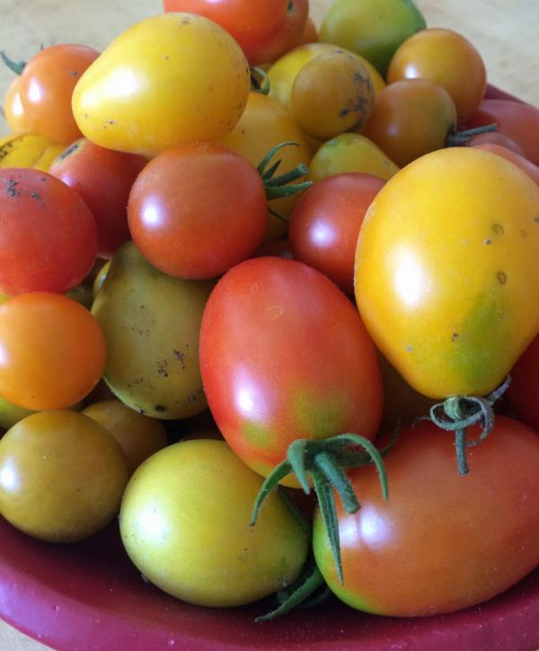 A bowl of summer tomatoes in Kathy Gunst's Maine kitchen. (Kathy Gunst/Here & Now