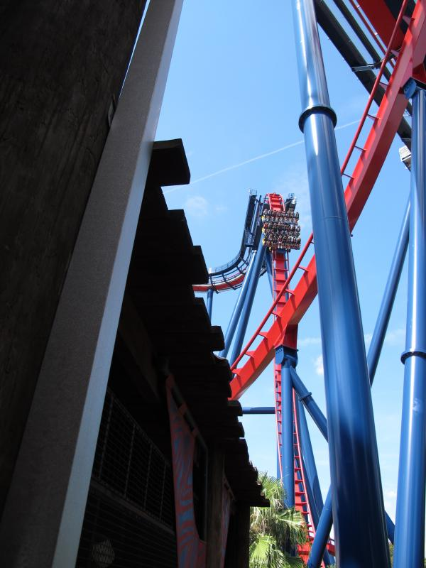 SheiKra at Busch Gardens Tampa features a 90-degree drop.