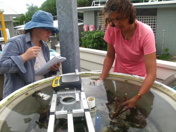 Sophie Dove (right) and Annamieke Van Den Heuvel of the Coral Reef Ecosystems Laboratory at the University of Queensland, St. Lucia, check on part of an experiment on the effects of water temperature and carbon dioxide levels on coral reefs.