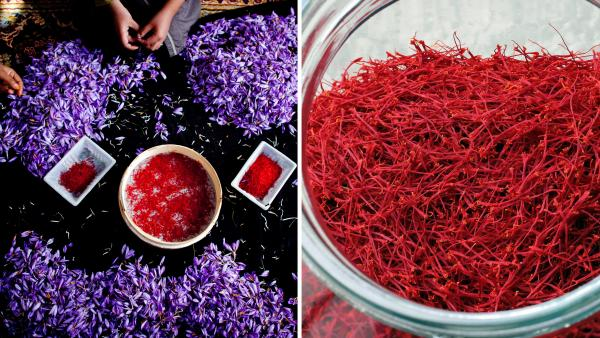 At left, a woman holds the saffron crocus during the saffron harvest in Herat, Afghanistan. At right, saffron flowers are collected in Saint Hippolyte, eastern France. Since the stigmas need to be picked from the flowers by hand, saffron is the world's most expensive spice.