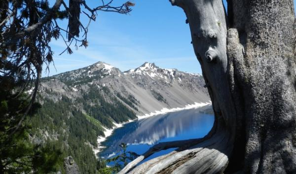 A dying whitebark pine in Crater Lake National Park. The National Park Service is planning to plant disease-resistant varieties in its wilderness zones but the Forest Service says the Wilderness Act prevents it from doing so in its wilderness areas,