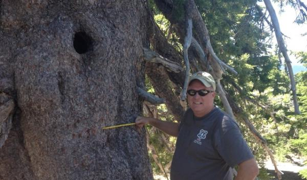Forest Service silviculturist Russell Oakes seeks to protect the Umpqua National Forest's whitebark pines, which face threats from blister rust, mountain pine beetles and climate change.