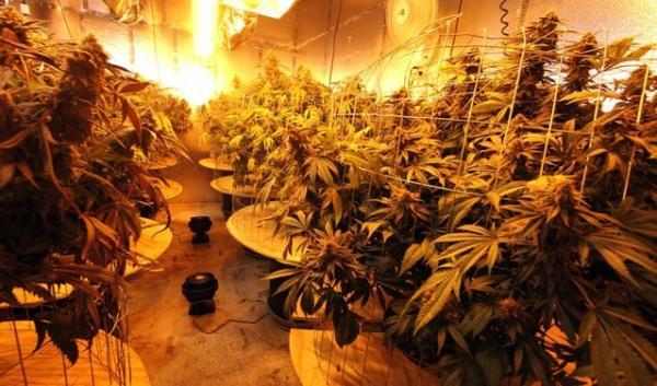 An indoor medical marijuana growing facility in Oakland, California.