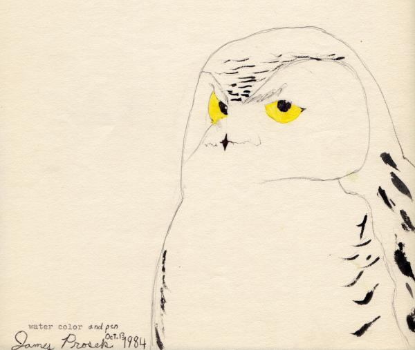 "As a boy, James Prosek was inspired by Audubon's <em>Birds of America</em>, just like the protagonist Doug in Gary D. Schmidt's <em>Okay for Now</em>. ""I was 9 when I painted this snowy owl,"" Prosek says. ""I had started using my grandfather's typewriter ... writing poems and stories over the birds."""