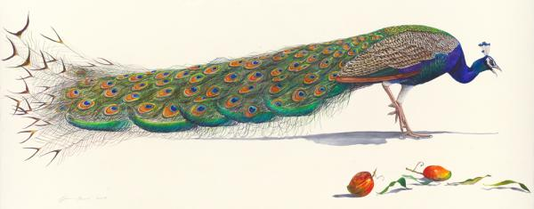 "In an essay that accompanied Prosek's 2008 collection in which <em>Peacock</em> is featured, literary critic Harold Bloom cites ""The Peacock"" by W.B. Yeats: ""What's riches to him/ That has made a great peacock/ With the pride of his eye?"""