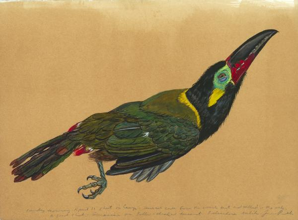 <em>Toucanet </em>is from the same 2010 collecting trip to Suriname. Prosek has traveled through the Balkans, southeast Turkey, New Zealand and Micronesia to document rare, threatened and fantastical species.
