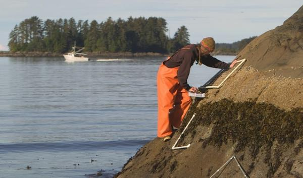 Researcher Melissa Miner counts and measures all the creatures within the survey plots near the shores of Sitka, AK.