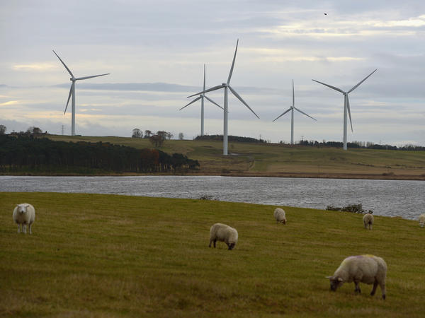 Sheep graze on land in front of wind turbines in Cowdenbeath, Scotland, in  Nov. 2012. Scotland's ambitious plans for renewable energy are clashing with Donald Trump's plans to develop a luxury golf resort on the country's northeastern coast.