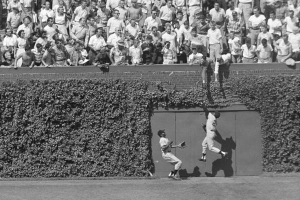 San Francisco Giants' center fielder Willie Mays snags a long fly ball against the famous ivy-covered wall in 1958.