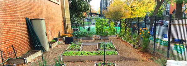 The garden at Watkins Elementary School.