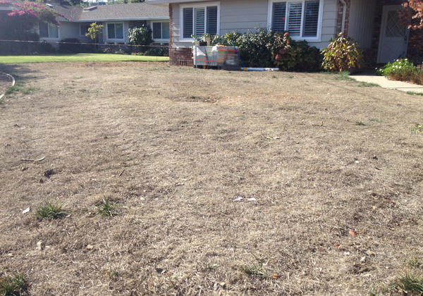 Los Altos resident Rebecca Lowell let her lawn die over the summer, and is planning to replace it, with the help of a rebate from the Santa Clara Valley Water District. (Daniel Potter/KQED)