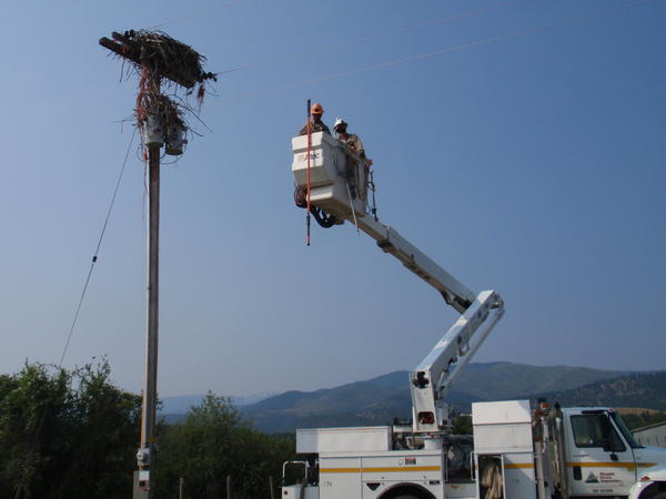 Linemen from Missoula Electric Cooperative prepare to clean the nest.