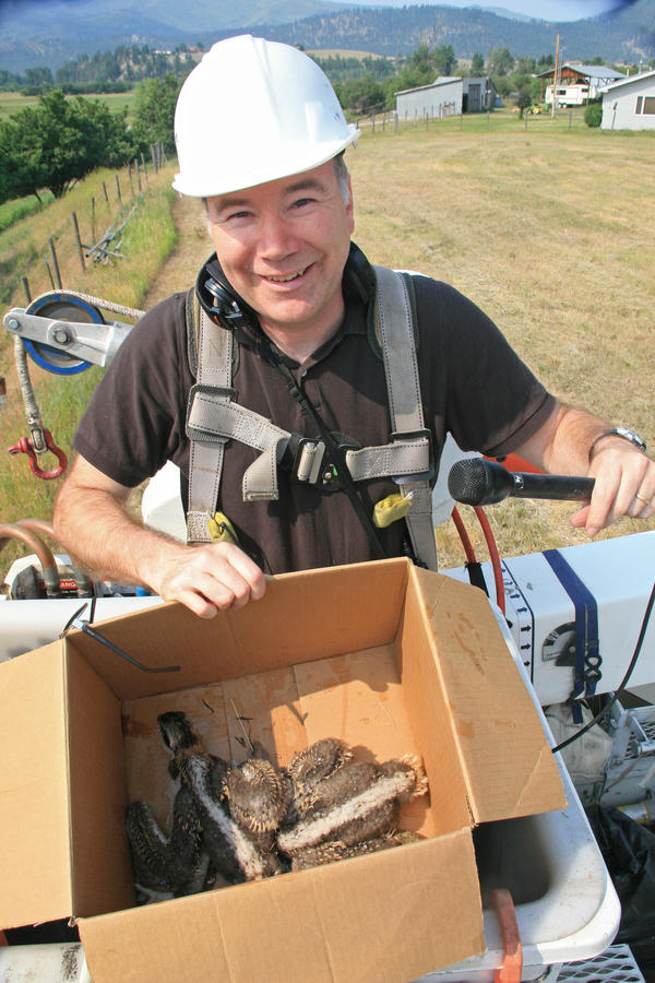 "Reporter Tom Banse with the two chicks, which were removed for a short time while their nest got its ""haircut."""