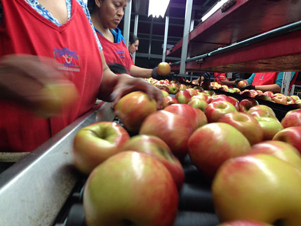 Broetje Orchards, of Prescott, Washington, has 24,000 boxes of apples coming off its two massive packing lines each day. But it's running out of cold storage to put them because of the slow down of exports out of Western sea ports.